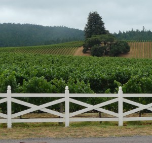 vineyards in Anderson Valley